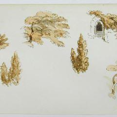 Estudio de elementos vegetales y de arquitectura