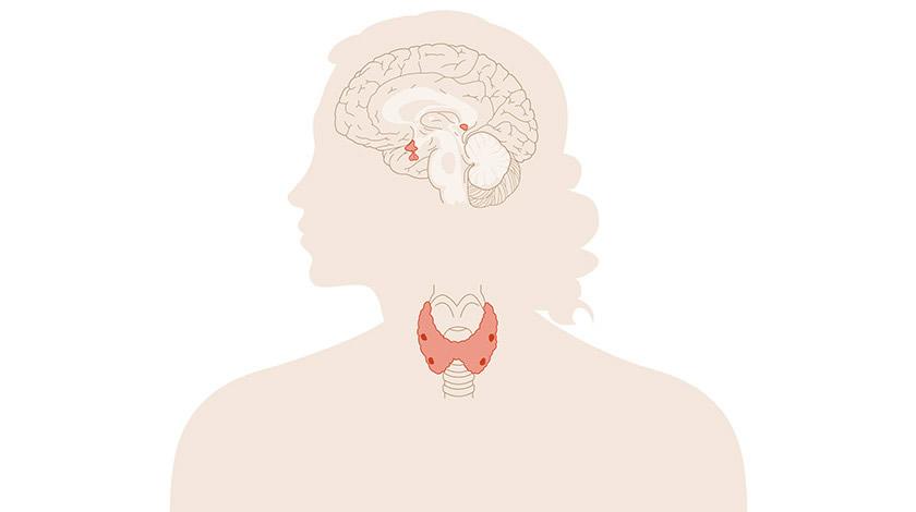 Sistema endócrino feminino (Secundaria-Bacharelato)