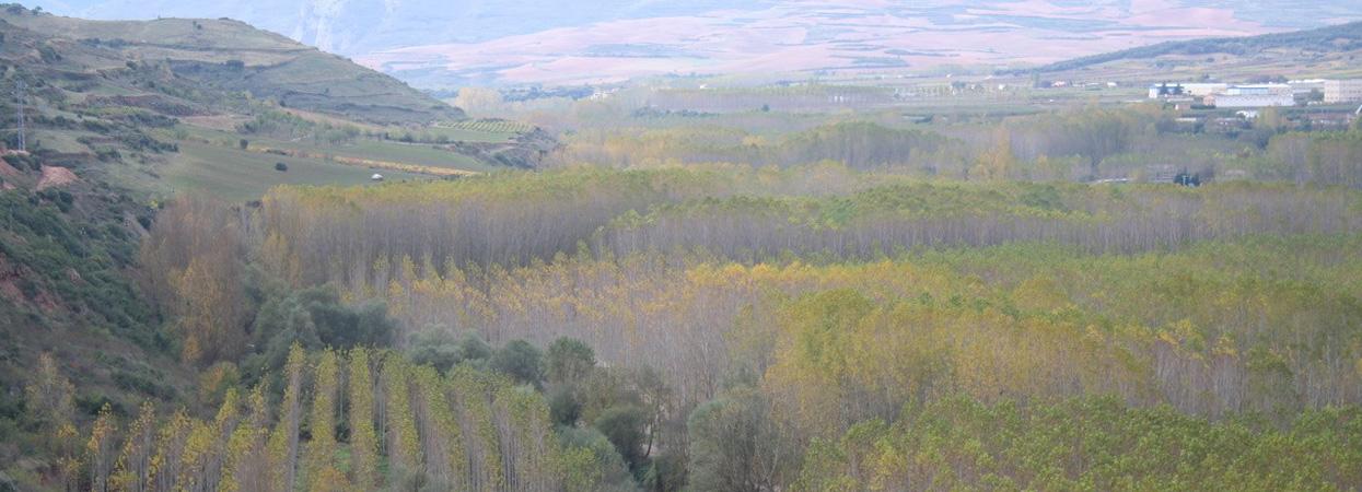 ¡En Garnica nos sumamos a celebrar el Día Internacional de los Bosques!
