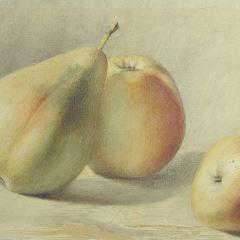 Estudio de frutas