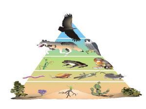 Los ecosistemas: estructura y dinámica