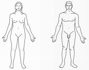 El cuerpo humano para 1 de primaria