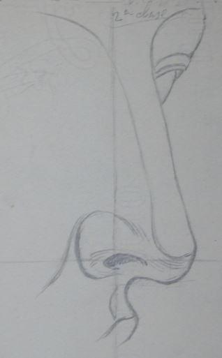Estudio de nariz