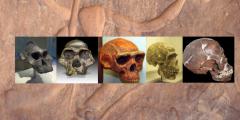 Menschliche Evolution: Geschlecht vor Homo