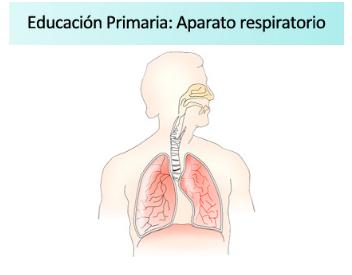 Ficha de actividades sobre el aparato respiratorio