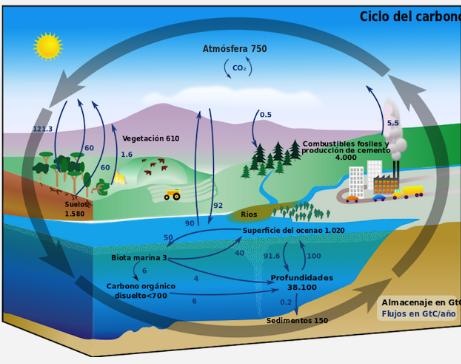 Ciclo del carbono (BioEnciclopedia)