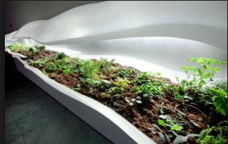 Creación de un jardín botánico (un arboreto)