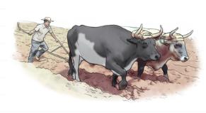 Agricultura extensiva y agricultura intensiva (siaprendes)
