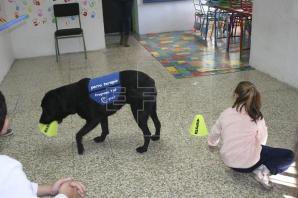 Proyecto TAP: terapia asistida con perros