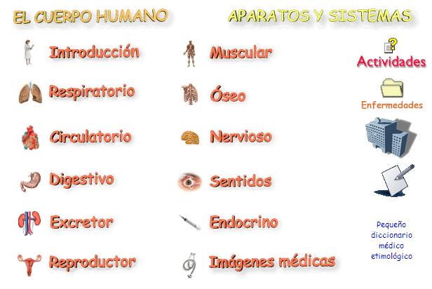 El Cuerpo Humano Aparatos Y Sistemas Didactalia Material Educativo