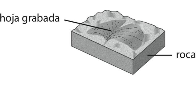 Pregunta liberada TIMSS-PIRLS de geología sobre edad de un fósil