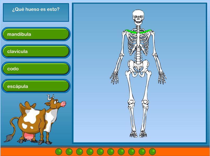 Esqueleto (ciberkidz.co)
