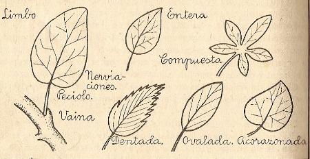 Ejercicios interactivos de las partes de las plantas (raíz, tallo, hojas y flores)