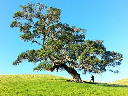 El árbol de la ciencia. Pío Baroja. Valoración crítica literaria
