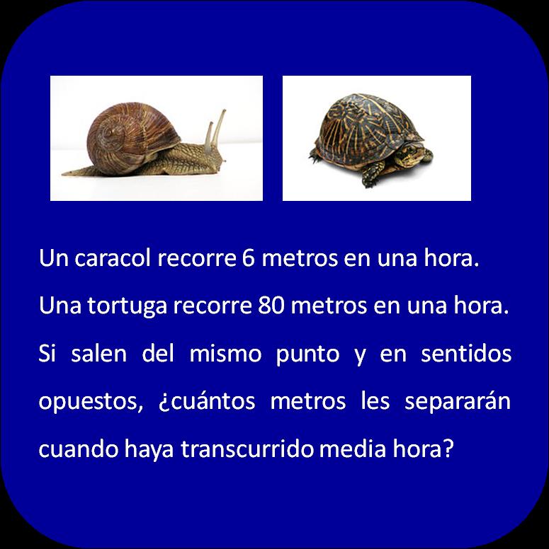 El Blog de Usa el Coco: El caracol y la tortuga