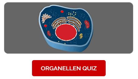 Organellen Quiz. Juego de las partes de la célula