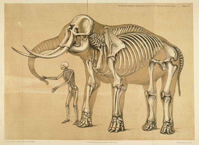 A Comparative View of the Human and Animal Frame by Benjamin Waterhouse Hawkins. Comparativa entre la anatomía humana y la animal