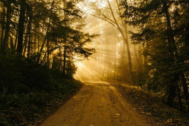 De la emergencia a la normalidad. El camino andado y el horizonte próximo