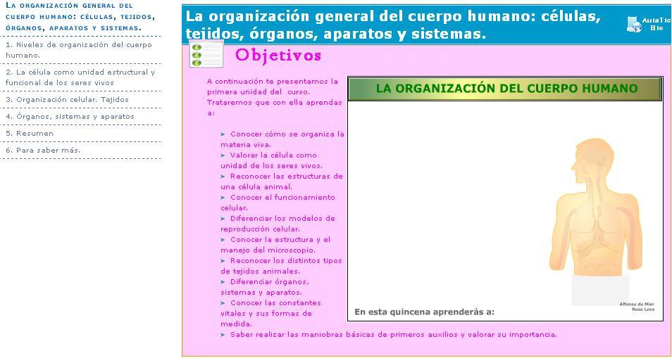 Organizacion del cuerpo humano mapa conceptual