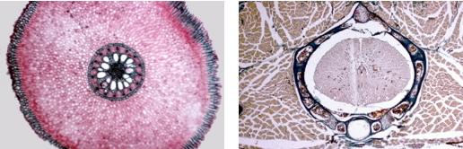 Los tejidos biológicos