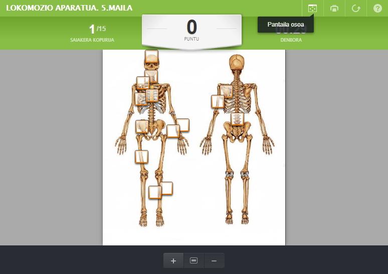 Lokomozio Aparatu: Eskeletoa (Educaplay)