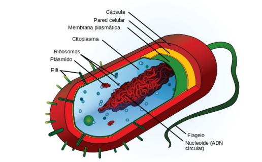 La célula y la genética