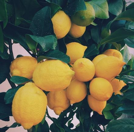 Los limones y otras pilas. La electricidad a partir de la energía química.