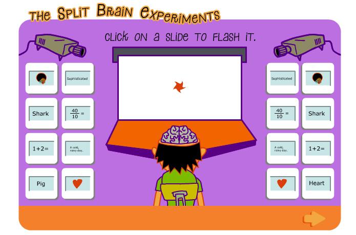 Experimento sobre las funciones de los hemisferios cerebrales (nobelprize.org)