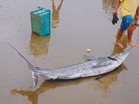 """Nicolás Olea: """"La recomendación de que los niños no coman atún llega 20 años tarde"""" (El País)"""