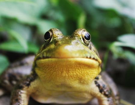 El sapito Glo-glo-glo (PerúEduca)