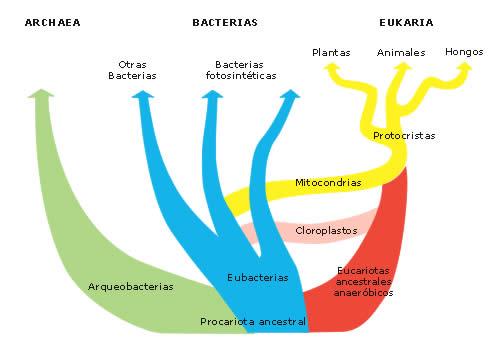 Las bacterias por Isabel Etayo Salazar