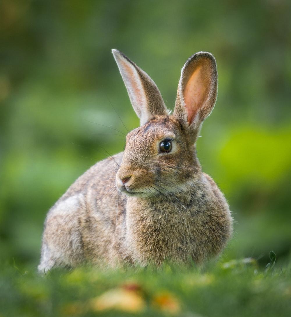 El conejo y Taro (PerúEduca)