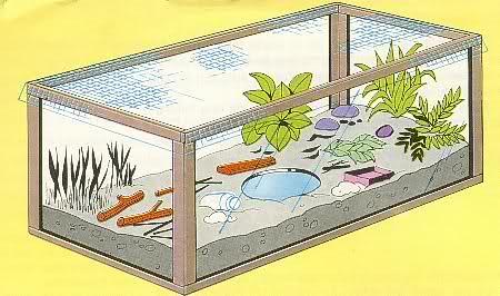 Experimentos Caseros de Ciencias Naturales: Construcción de un Terrario Casero