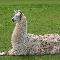 Paca El Rey De Las Llamas