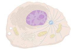 Juegos de células