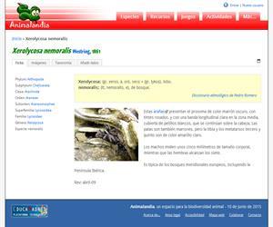 Xerolycosa nemoralis (Xerolycosa nemoralis)