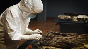 Científicos confirman el origen norteafricano de los aborígenes canarios