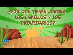 ¿Por qué tienen joroba los camellos y los dromedarios?