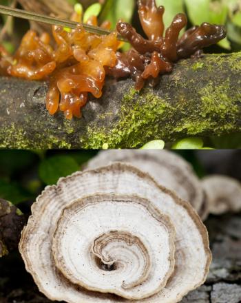 Fungi Biodiversity