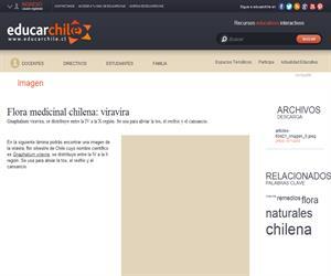 Flora medicinal chilena: viravira (Educarchile)