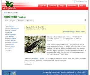 Víbora pelíade (Vipera berus)