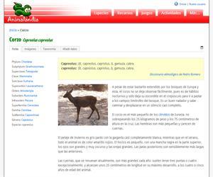 Corzo (Capreolus capreolus)