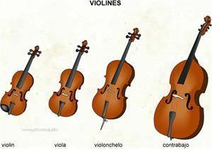 Violines (Diccionario visual)