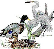 Les aus del Delta de l'Ebre