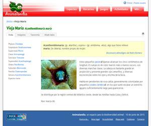 Vieja María (Acanthemblemaria maria)