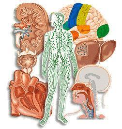 Apuntes sobre el cuerpo humano