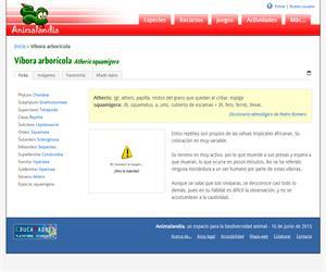 Víbora arborícola (Atheris squamigera)