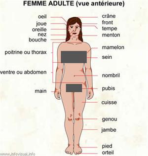 Femme adulte (vue antérieure) (Dictionnaire Visuel)