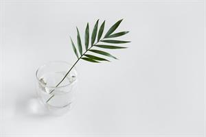 Crecimiento de plantas en diversas gravedades