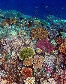 Los ecosistemas y su dinámica